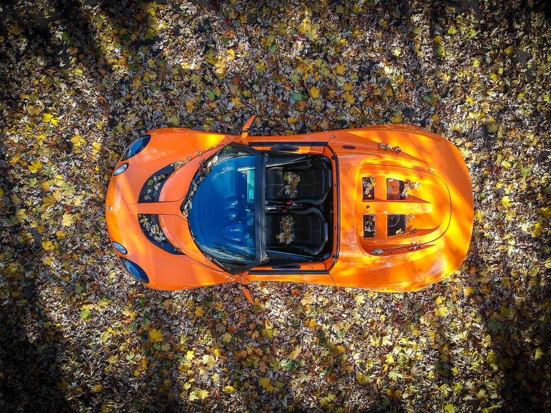 elise fall leaves